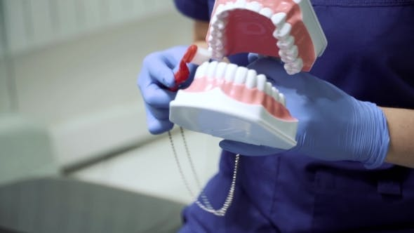 Thumbnail for Dentist Showing How To Brush The Teeth