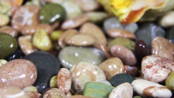 Thumbnail for Sea Stones And Seashells Rotate