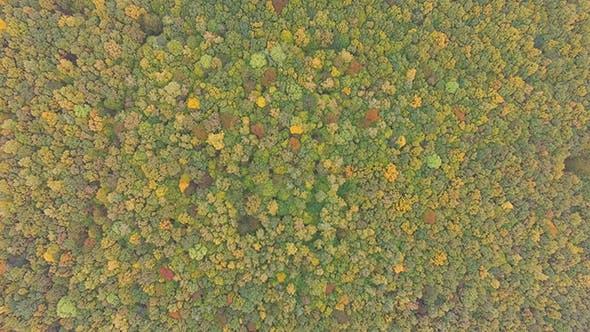Thumbnail for Autumn Leaves Colours