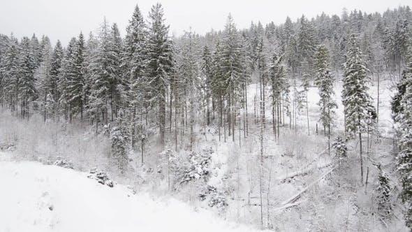 Thumbnail for Fliegen im Winter Holz