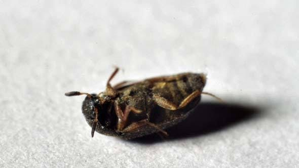 Thumbnail for Beetle Lying on Back Wakes Up