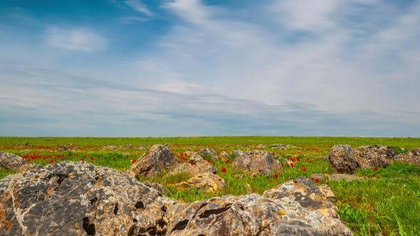 Thumbnail for Rocky Terrain With Green Grass And Red Tulips