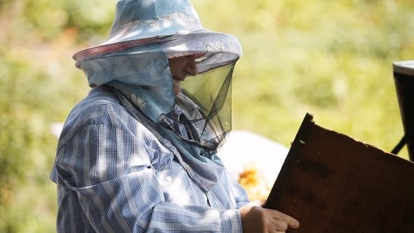Thumbnail for Beekeeper Checks The Hive With Bees