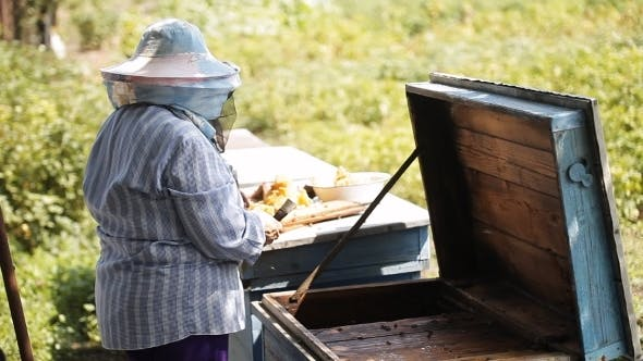 Beekeeper Checks Beehive