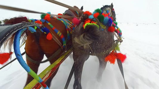 Cover Image for Sleigh Rides 1