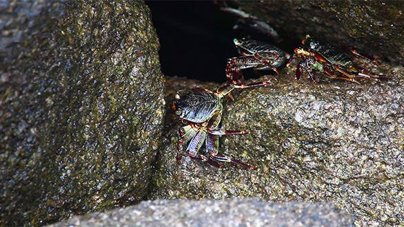 Cover Image for Crabs