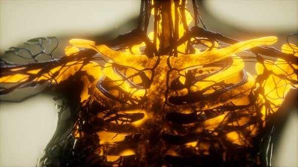 Human Skeleton Bones Scan Glowing