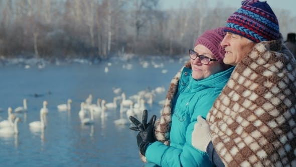 Thumbnail for Elderly Couple Embracing In The Background Of The Lake With Swans