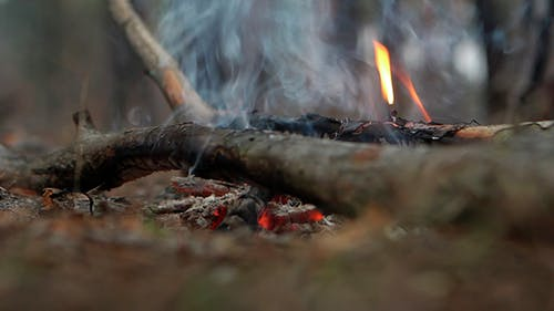 Campfire In The Forest