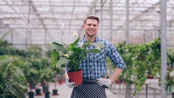 Thumbnail for Handsome Florist Holding Spathiphyllum