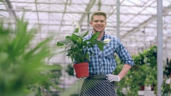 Thumbnail for Handsome Guy Holding Flower In Greenhouse