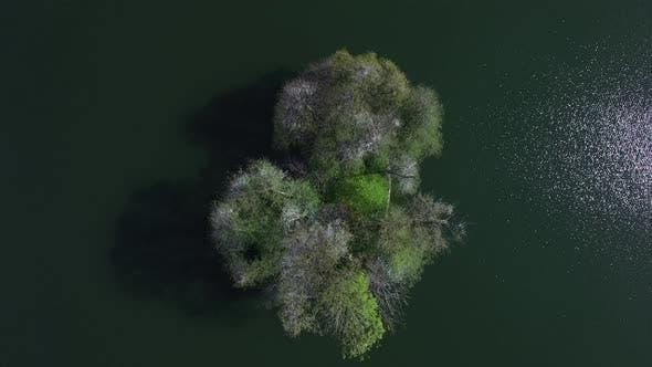 Thumbnail for Tree Island Lake Nature Landscape Scenery