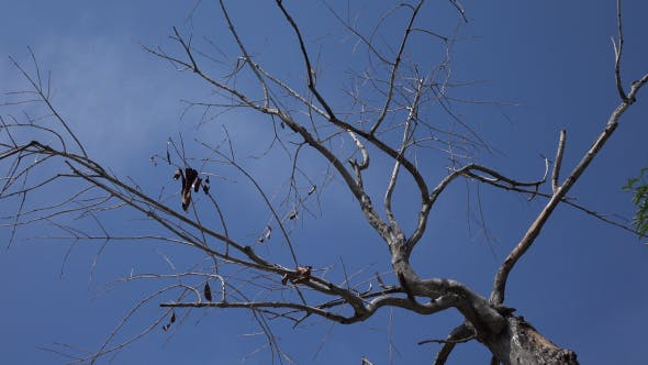 Thumbnail for Dead Branches Tree