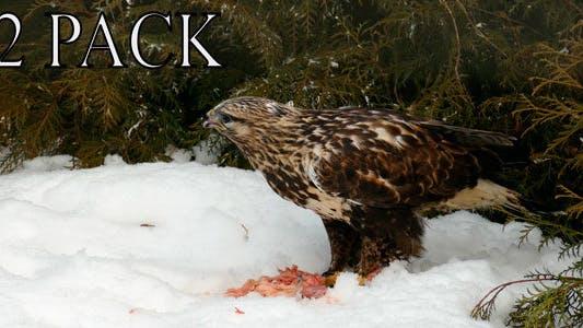 Thumbnail for Predator Breakfast.