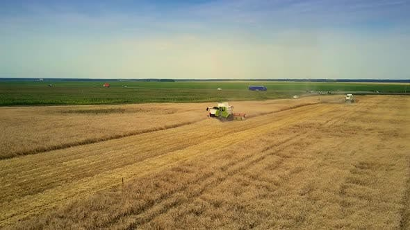 Bird Eye View Harvester Operates in Wheat Field at Meadow