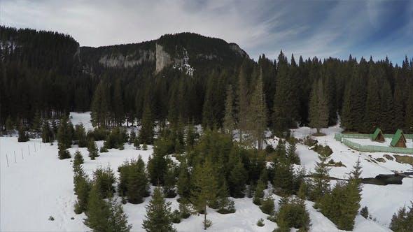 Thumbnail for Virgin Pine Trees Forest
