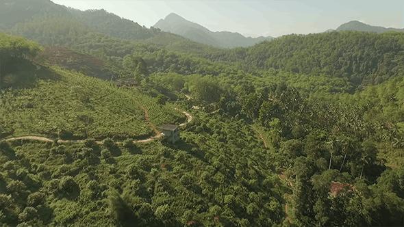 Thumbnail for Forward Flyover a Tea Estate