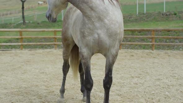 Thumbnail for Tilt up of a horse