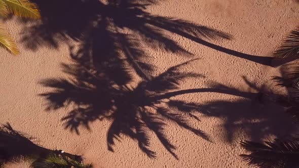 Thumbnail for Palms Trees In The Beach With House In 60fps