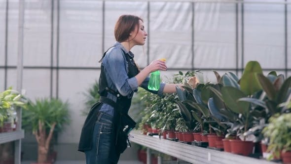 Thumbnail for Female Florist Caring For Flowers In Greenhouse