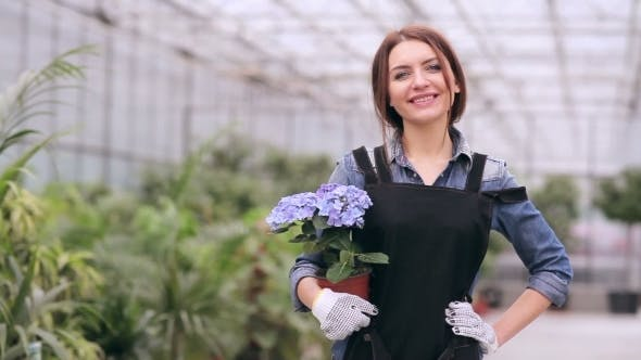 Thumbnail for Smiling Beautiful Florist With Hydrangea