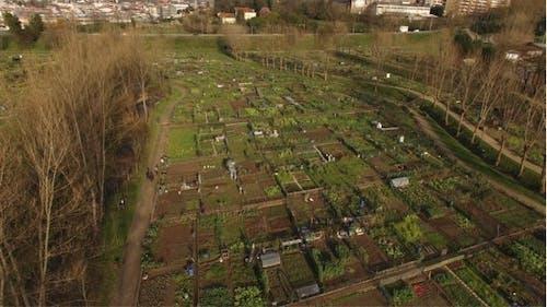 Horticultural 4K