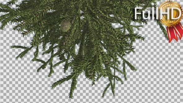 Thumbnail for Monkey Puzzle Top of Tree Turned Image Cones