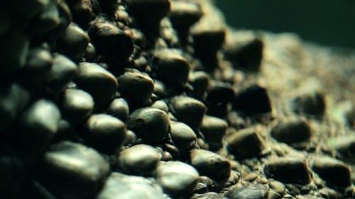 Parts Of The Body Alligator Underwater .