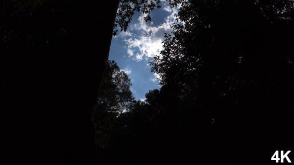 Sunbeam Through Silhouette Tree