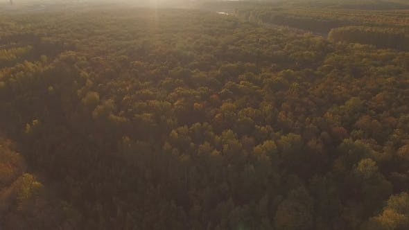 Thumbnail for Aerial Autumn Forest And The Sun