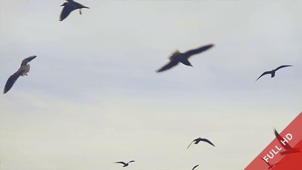 Thumbnail for Seagulls and Clouds