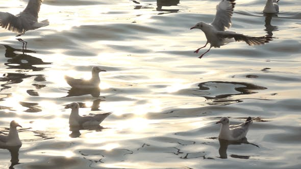 Thumbnail for Seagulls And Sea