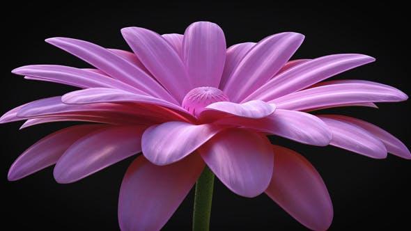 Flower - Elegant Logo Reveal