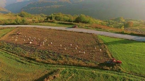 Aerial Mountain Farmland