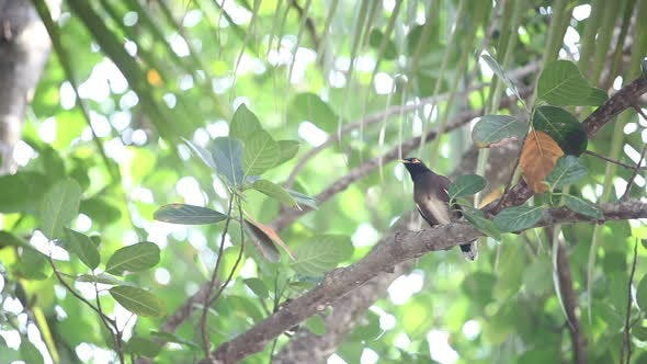Thumbnail for Indian Woodpecker Perched on Tree