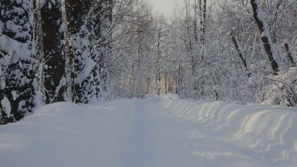 Thumbnail for Road Through Snowy Park