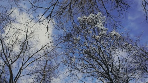 Thumbnail for Snow On The Branches While Snowing In The Forest