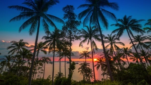 Cover Image for Sunset At Sea On a Background Of Palm Trees
