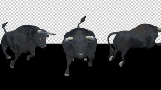 Thumbnail for Black Bull - Attack Run - Pack of 3