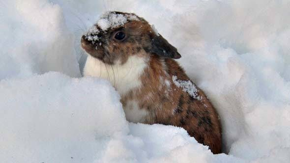 Cover Image for Fluffy Rabbit Sits in Snow in Winter