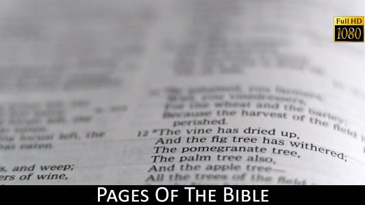 Thumbnail for Pages Of The Bible 20