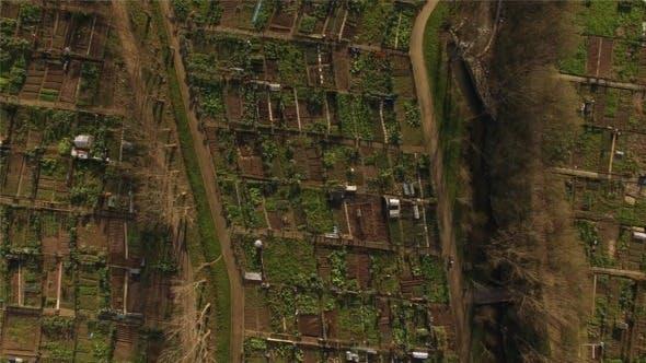 Thumbnail for Organic Vegetable Garden