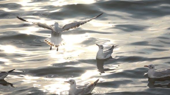Thumbnail for Flying Seagulls