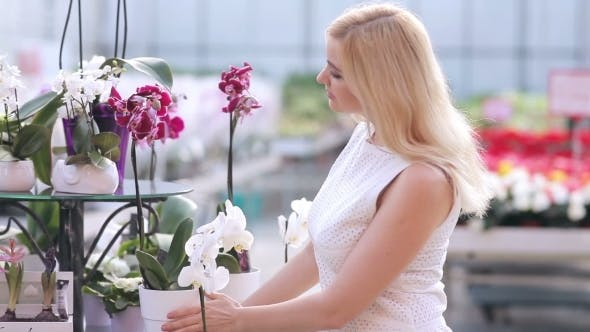 Thumbnail for Woman Choosing Orchid In Flower Shop