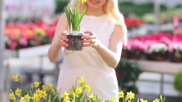 Thumbnail for Beautiful Woman Choosing Narcissus In Greenhouse