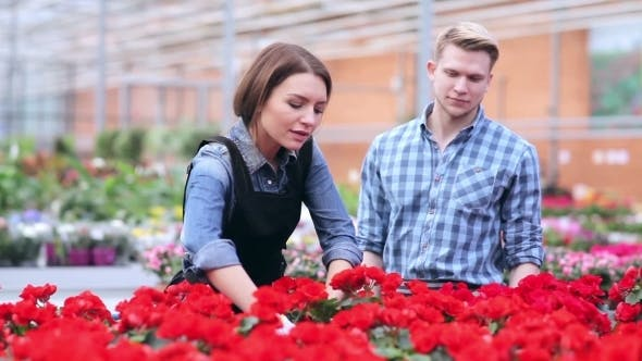 Thumbnail for Florists Examine Flowers On a Shelf In Greenhouse