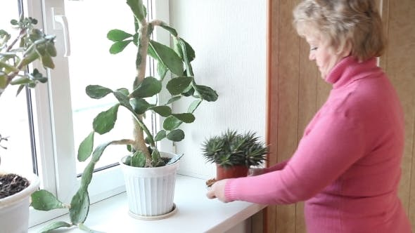 Thumbnail for Woman Caring For Flowers On The Windowsill