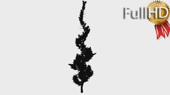 Hollywood Juniper Silhouette Animated Curved Tree
