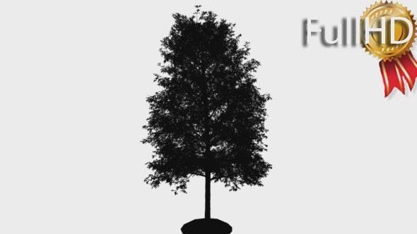 Thumbnail for Shingle Oak Silhouette of Animated Tree