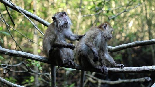 Monkeys At The Jungle